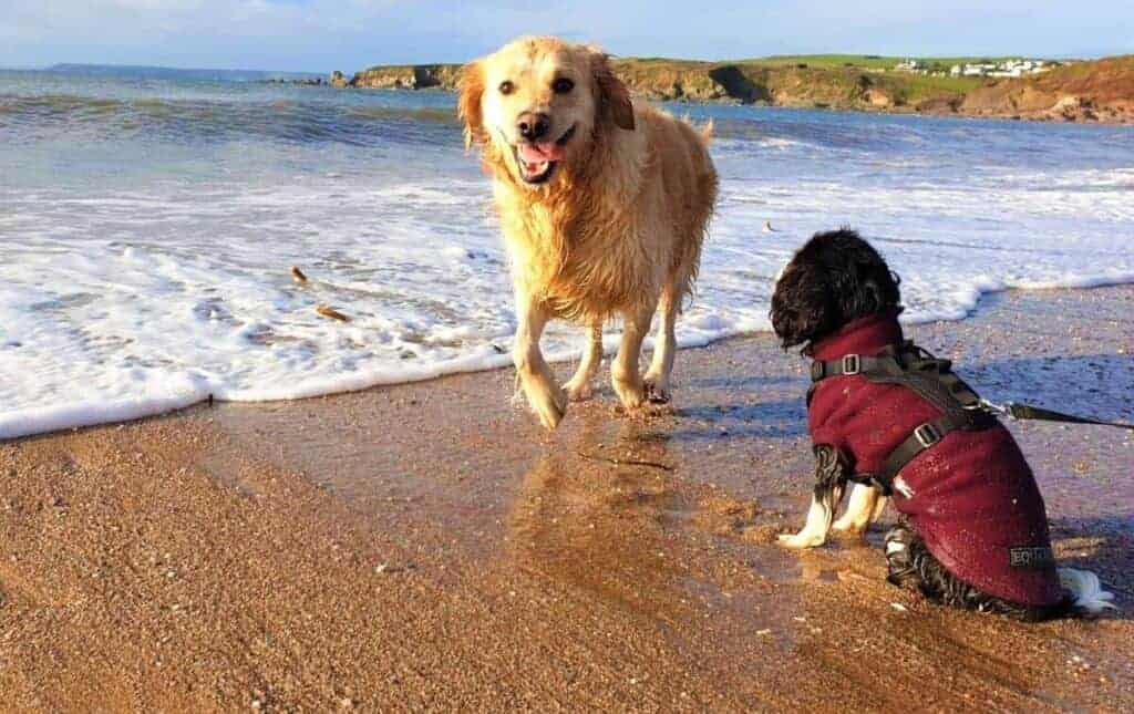 walking dogs together